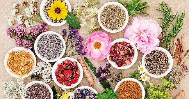 Sử dụng thảo dược tăng kích thước ngực